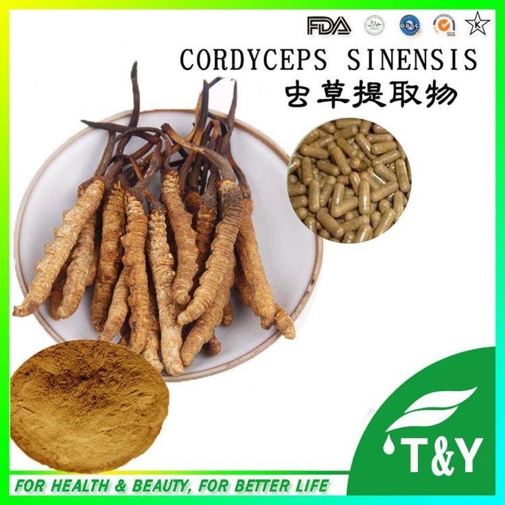 Antioxident Cordyceps Sinensis Extract/Cordyceps Extract/ Cordyceps Sinensis 500mg*200pcs