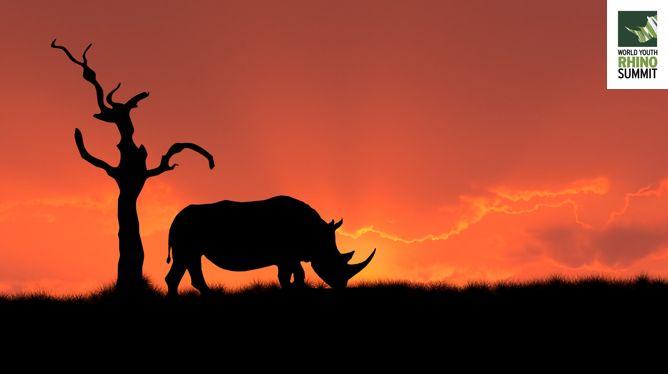 There are just #5Days to go until the #RhinoSummit2014  www.youthrhinosummit.com #Rhino #wildlife #nature