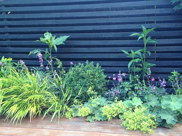 Black Batten Fence And Mixed Border
