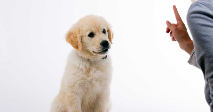Socialization means exposing your puppy to as many new people, animals, environments and other stimuli as possible without overwhelming him. http://healthypets.mercola.com/sites/healthypets/archive/2014/01/06/puppy-socialization-class.aspx