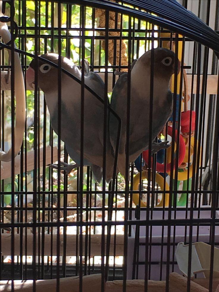 Marco and Polo(The noisy birds)
