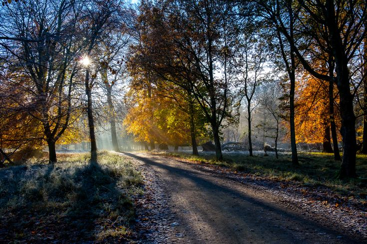 Forest road in autumn (Dyrehaven, Denmark) by Ulrich Jakobsson cr.c.
