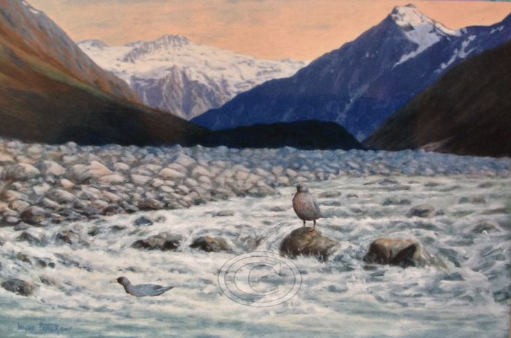 New Zealand Blue Mountain Ducks in upper Rangitata River. Painted in acrylic. Fine art prints available.