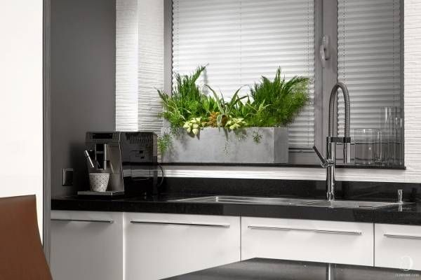 Идеальное дополнение современного интерьера: Kitchen, композиция из комнатных растений, аспарагуса, драцены, фиттонии в модном кашпо (цемент).