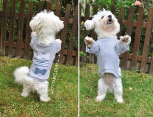 dog with jersey. Patterns for dogs! So cute