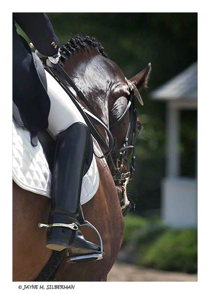 .: Equine Photography, Dressage, Photographers Photo, Hors Knowledge, Art, Real Hors, Horsey Stuff, Equine Photographers, Hors Breeds