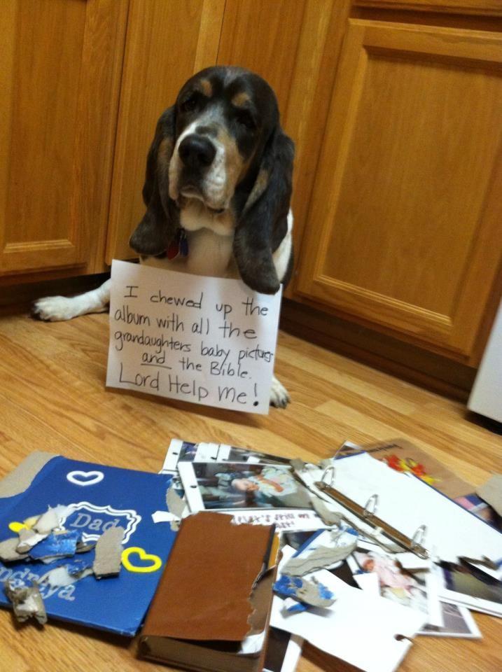 Dog Shame: Photo
