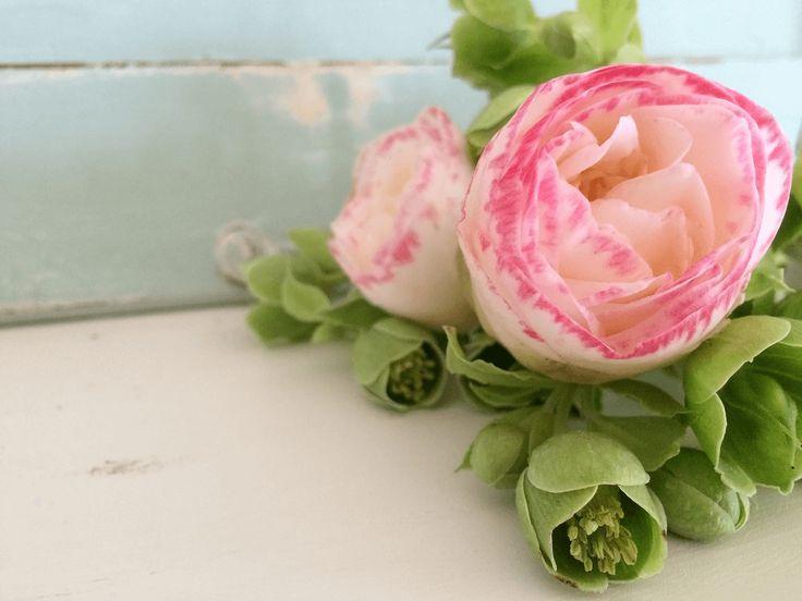 Imagem de Flor Camélia #imagensdeflores #camelia #flores http://wp.me/p2yuDB-cM