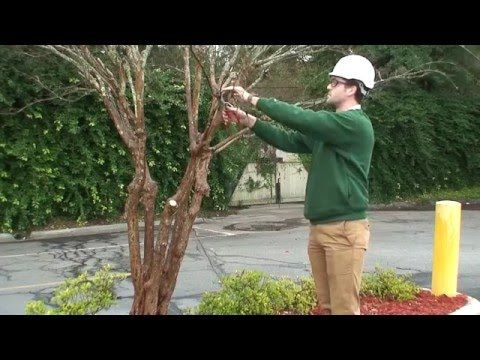 How To Prune Crepe Myrtles Southern Living Youtube Front Driveway Pinterest