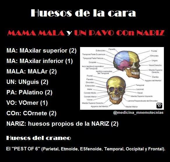 mnemotecnias medicina - huesos de la cara
