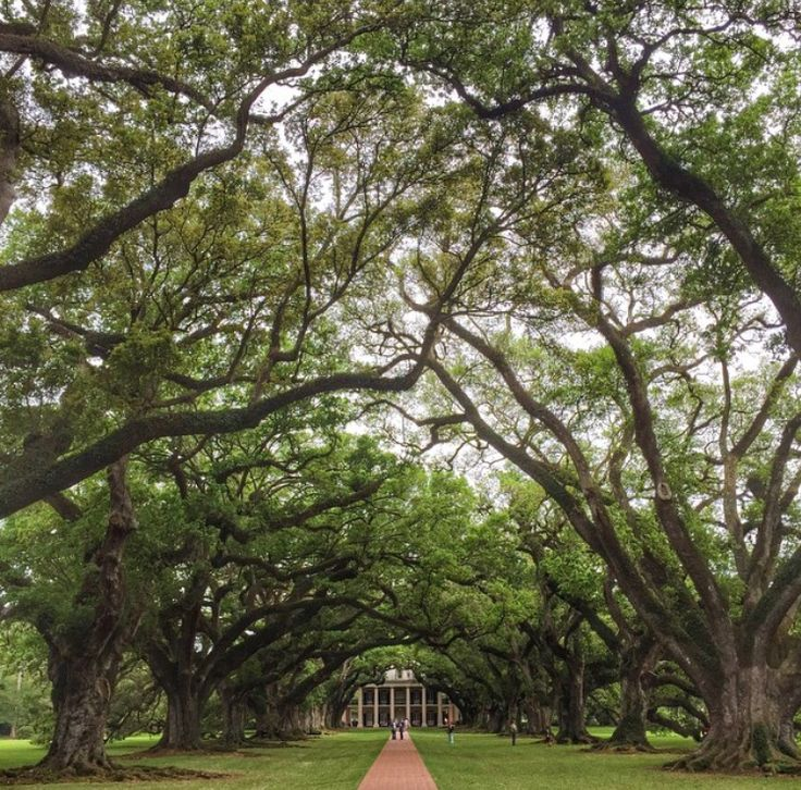 Oak Alley Plantation Interview With A Vampire Oak Alley Plantation, ...