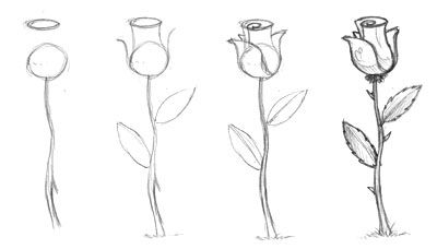 Quick Sketch: How to draw a rose