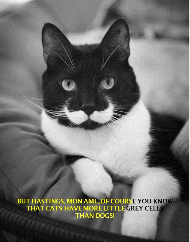 Hercule Poirot Cat quotes to Hastings