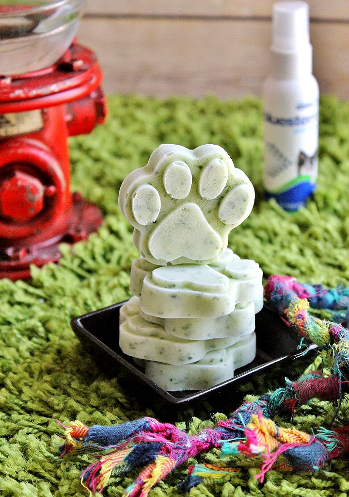 4 ingredient Mint Parsley Pup Treats can help fight bad breath. bluestem™ with coactiv+™ water additives and breath sprays can help fight tartar build up and bad breath in your dog. It's a fuss free way to help support healthy oral hygience! #bluestempets #ad @bluestempets