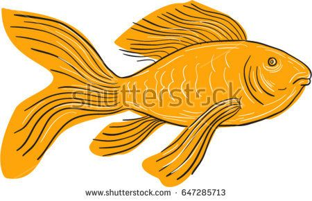 Drawing sketch style illustration of a Gold Butterfly Koi, also called Long Fin Koi swimming viewd from the side set on isolated white background.   #longfinkoi #drawing #illustration