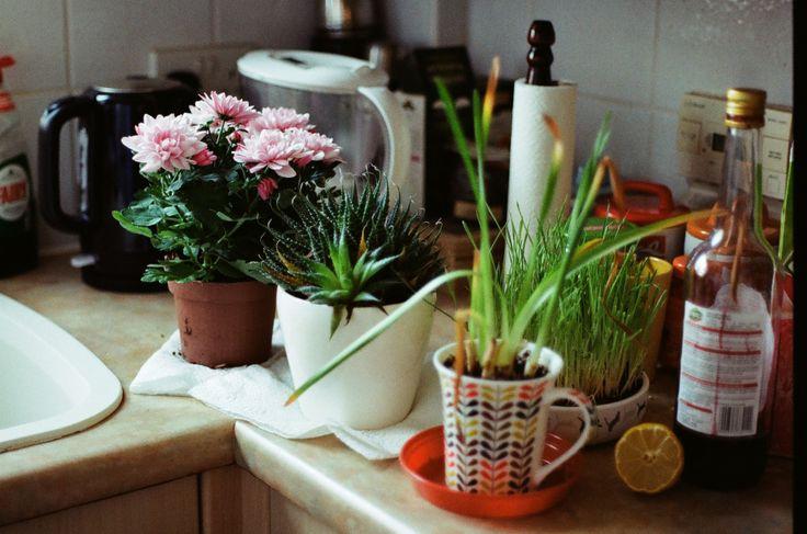 Domowy ogród.