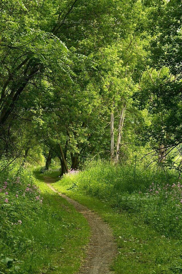 Pathway (Vermont) by Ellen Powell