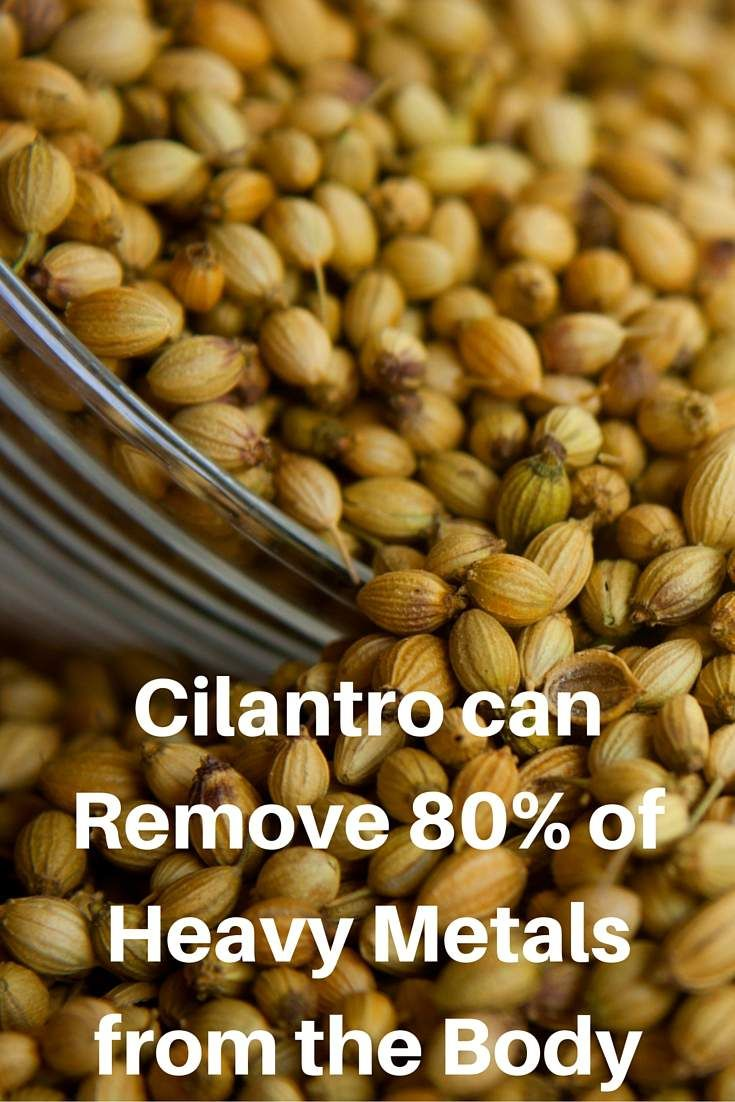 Cilantro or coriander is an annual herb, packed with minerals like calcium, potassium, magnesium, manganese and iron (essential minerals). It is also rich in vitamins K and A. This herb is able to detoxify the body of heavy metals and similar toxic pollutants. Namely, it is amazing for removing mercury from the system.