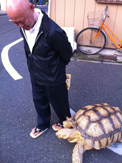 Best MY BEST FRIENDS Images On Pinterest Amphibians - Man walks pet tortoise through tokyo