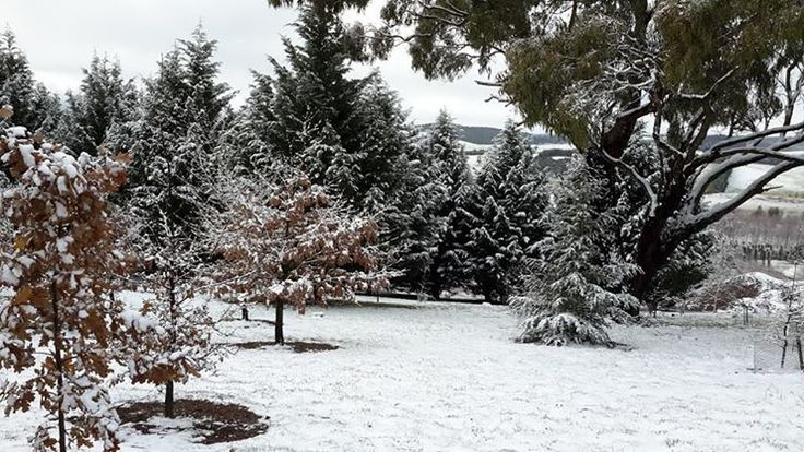 Snow at Mayfield Garden June 2014 http://www.mayfieldgarden.com.au/