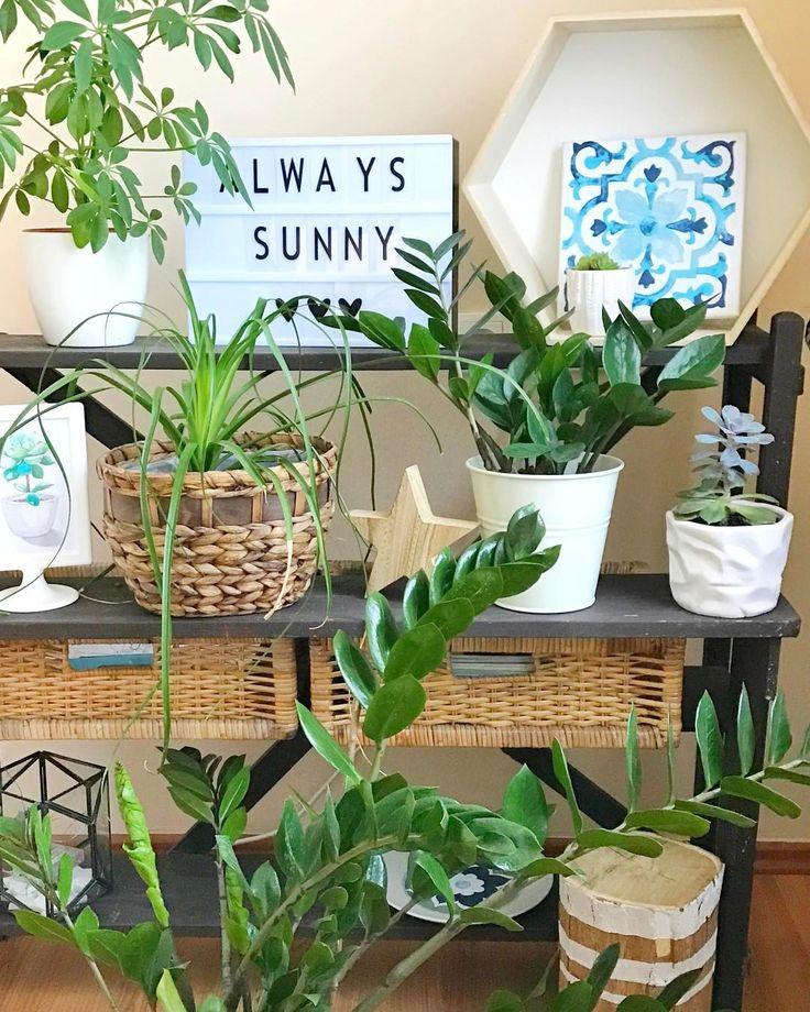 """99 kedvelés, 4 hozzászólás – Emese (@twinstahome) Instagram-hozzászólása: """"Always sunny#plants  #garden#cinemalightbox#livingroom#follow#decoration #hungary…"""""""