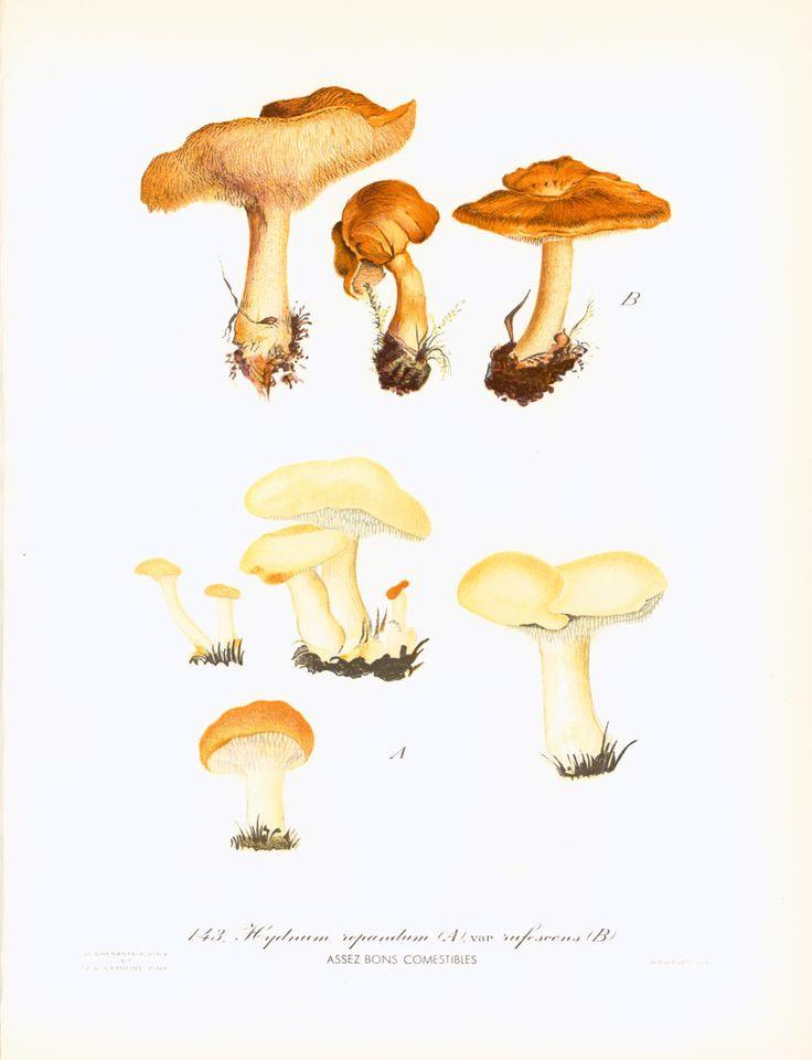 The 25 best dessin champignon ideas on pinterest champignon dessin step by step drawing and - Dessin mouton ...