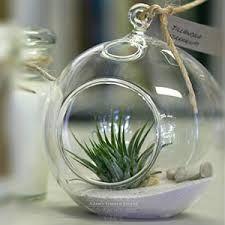 Tillandsia in glass sphere.  In stock at Fleurifik