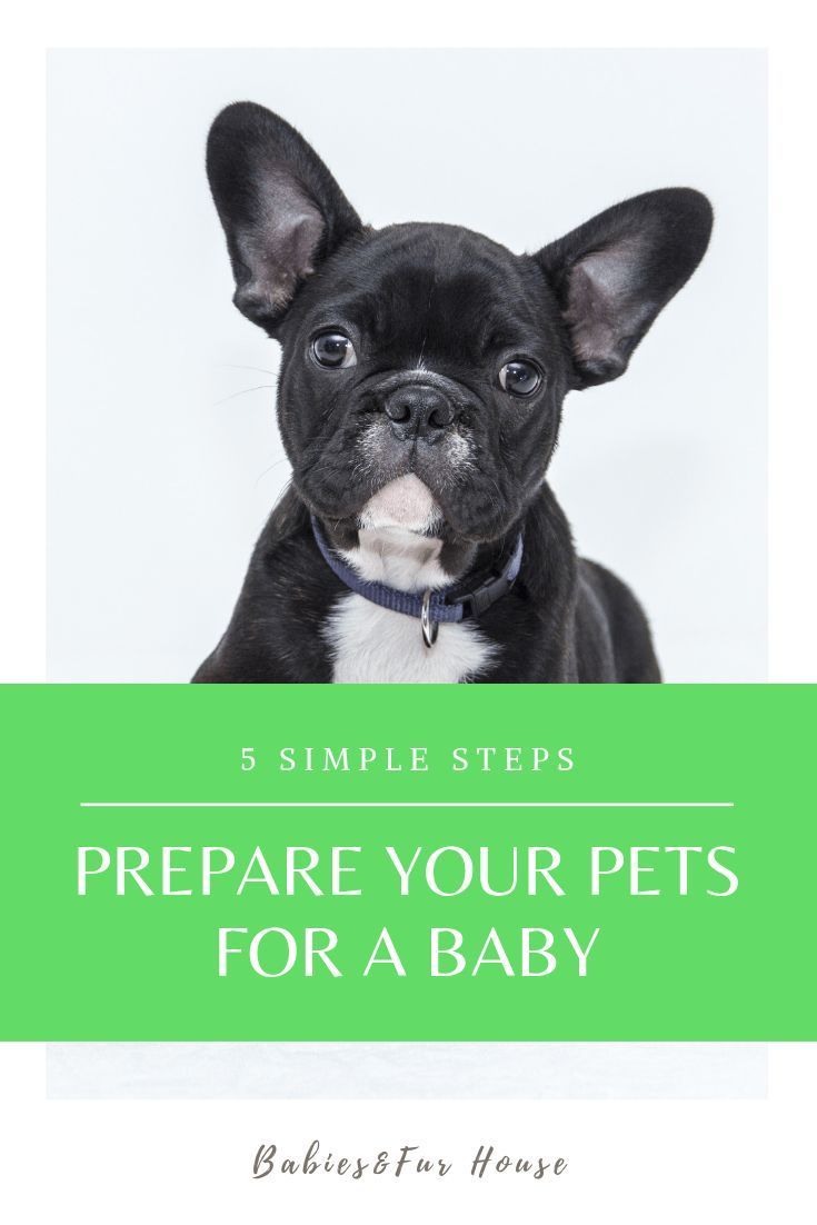 How To Prepare Pets For A Newborn Babies Fur House Pets Kitten Care Cat Cuddle