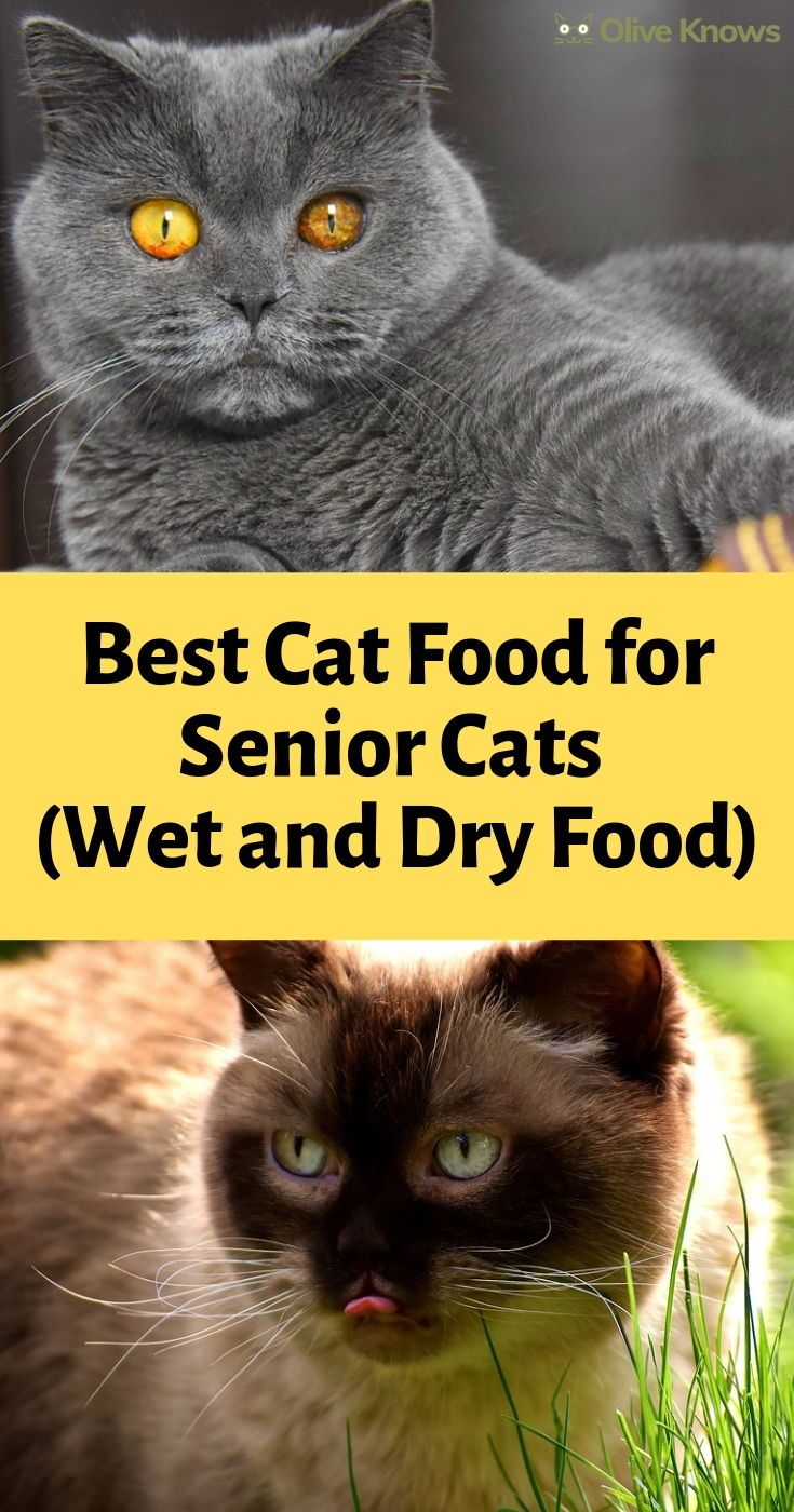 Best Cat Food For Senior Cats Wet And Dry Food Oliveknows Best Cat Food Cat Food Senior Cat