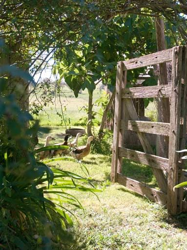through the gate..is a walk of country comfort..my bits and pieces of the perfect Dream home for life, children & grandkids forever...