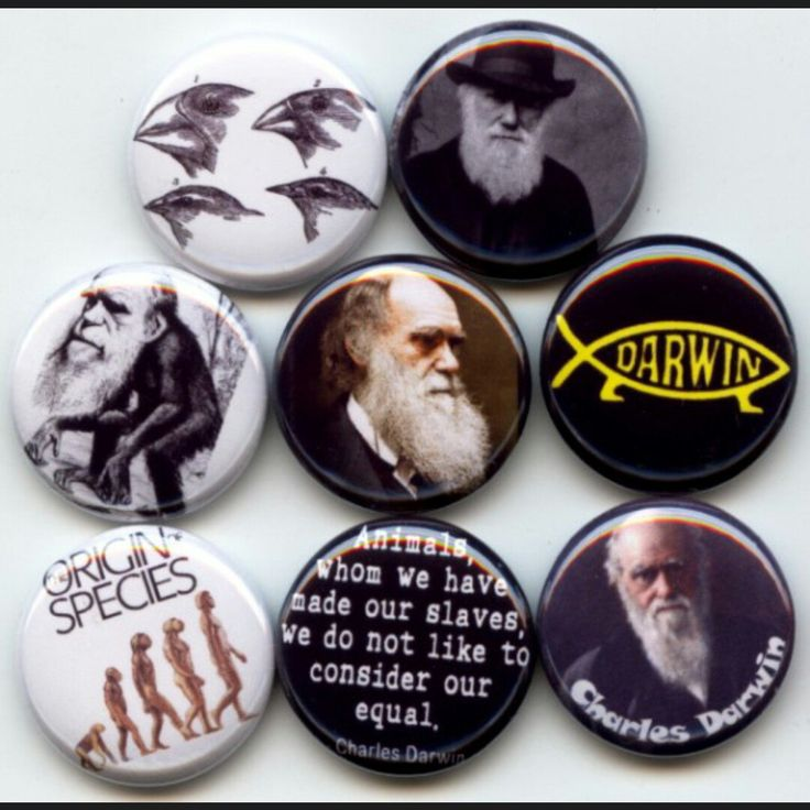 Charles Darwin Theory of Evolution pinback button set by Yesware11 on Etsy.. Click for details!