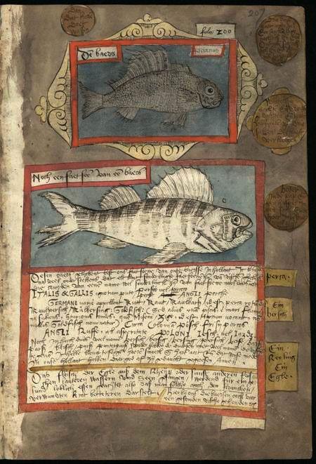Adriaen Coenensz 16th c.: Dutch fish auctioneer and painter of studies of marine life.