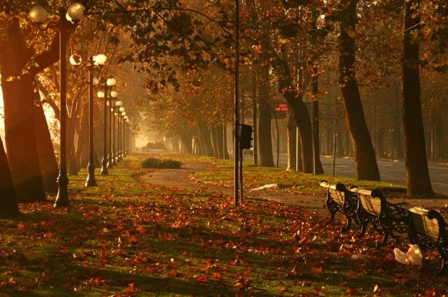 I would love to be sitting on that park bench right now, beautiful :)