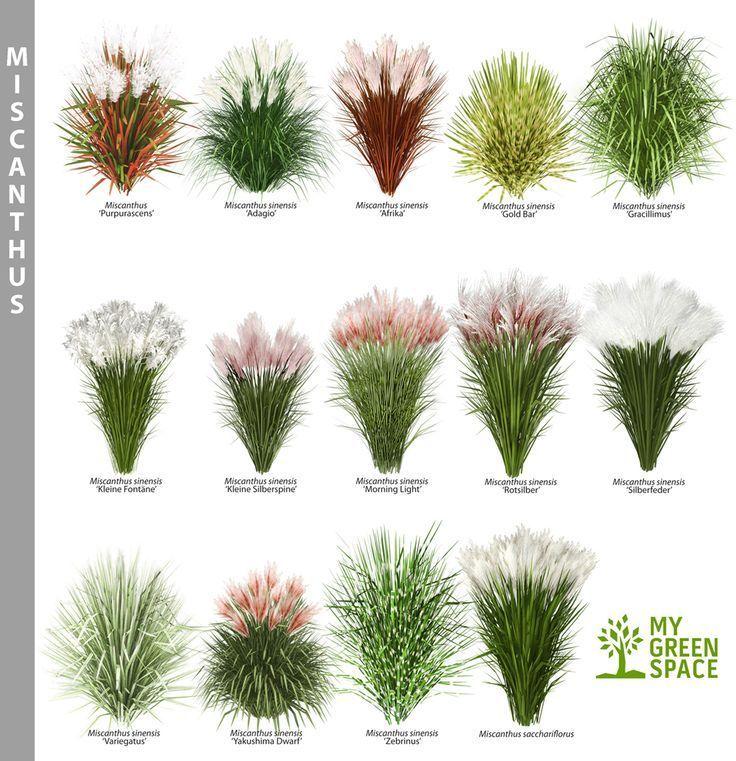 Garten #garten #plantingideasborder – Winnifred Corwin