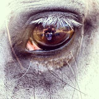 Ya huele a feria #feriadesevilla #sevilla #feria #eye #horse #caballo #canon #canonphoto #instagood #vsco #vscogood #vscoboss #vscolovers #vsconature #vscophile #nature #nofilter #garbla