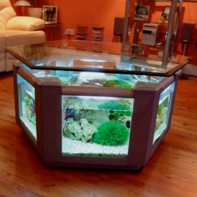 Coffee Table Fish Tank Neat Idea Live Pinterest Beautiful Awesome And Kittens