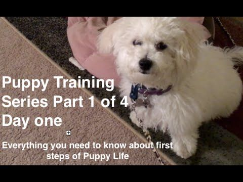 """Sign up for """"FIDO'S TIPS"""" here http://eepurl.com/bkdBL5 Expressing a dogs anal glands is You Tube channel and our goal is to bring you tons of information on..."""