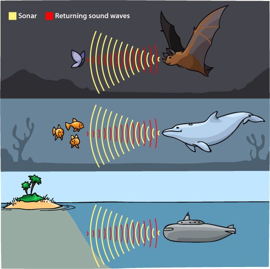 The sonar was invented by Lewis Nixon in 1906. Invented to detect icebergs.