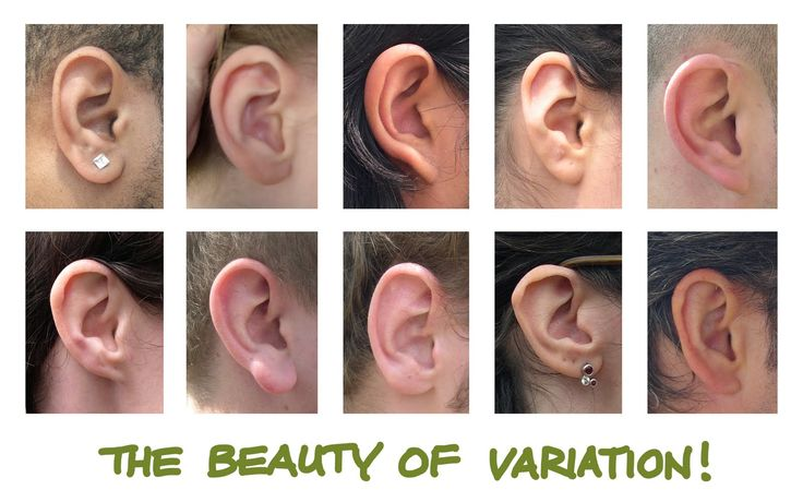 Human Anatomy for the Artist: The External Ear: Shhh, I'm Listening to Reason!