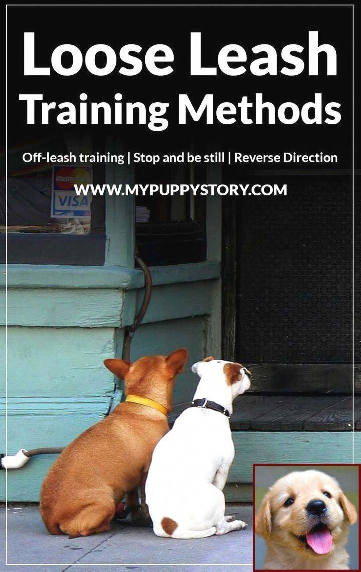 Simply Click Here To Get More Information About Dog Training