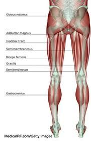 how to build quad and hamstring muscles