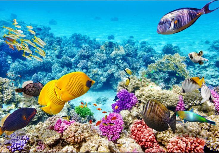 # great barrier reef.