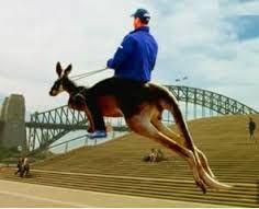 Image result for kiwi riding kangaroos