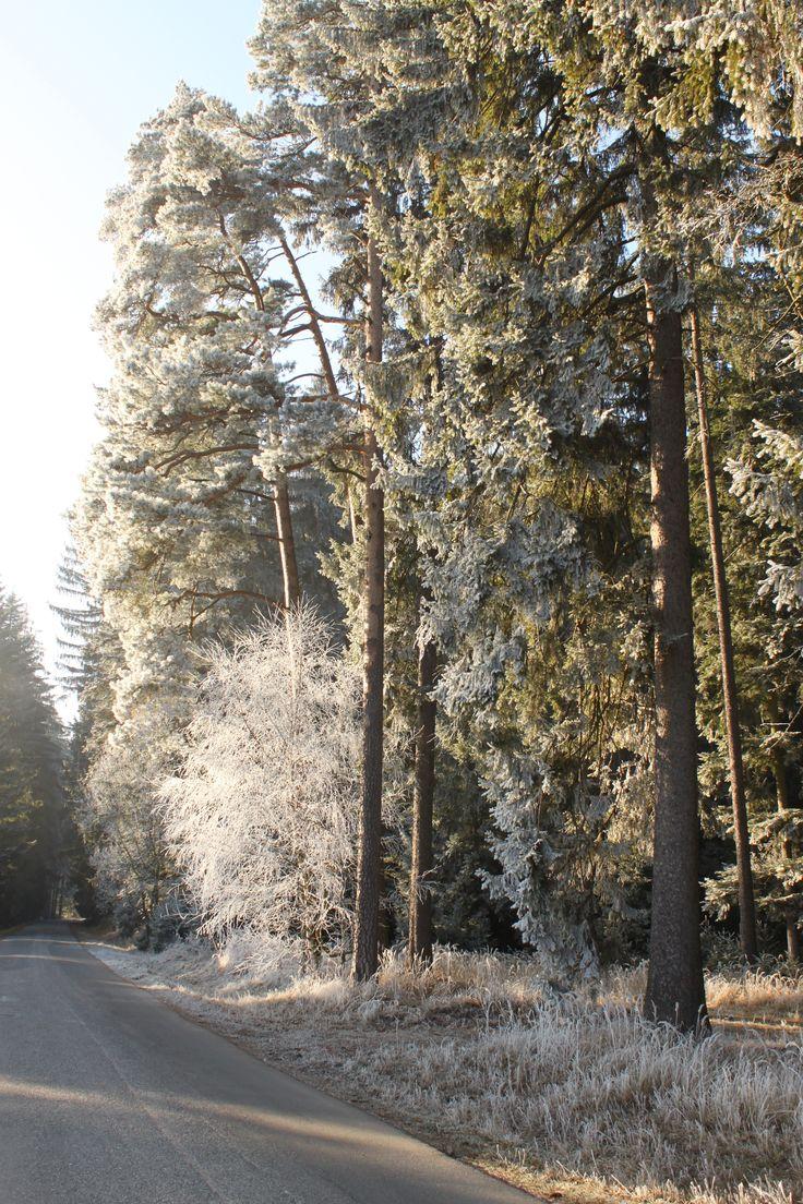 les u Trstěnice 31.12.2016