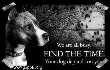 Dogs need your time and care.