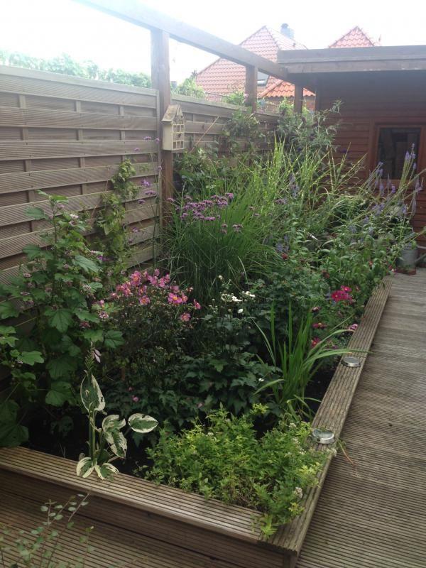 35 bestin meinem Garten images on Pinterest Clematis, Daisy - abo mein schoner garten