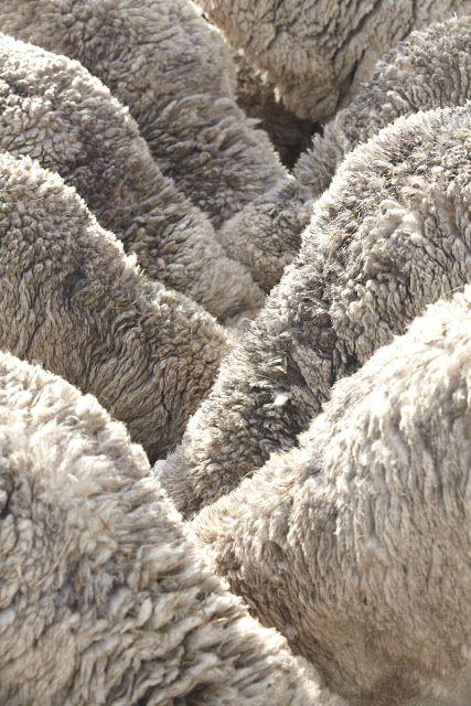 WOOL,wool wool...................