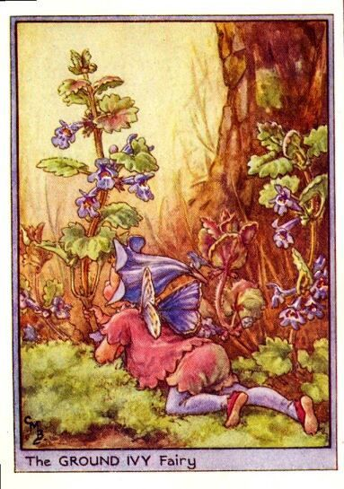 Ground Ivy Flower Fairy Vintage Print,  Cicely Mary Barker--printed c.1950 – The Ground Ivy Flower Fairy is one of Cicely Barkers Wayside Flower Fairies.
