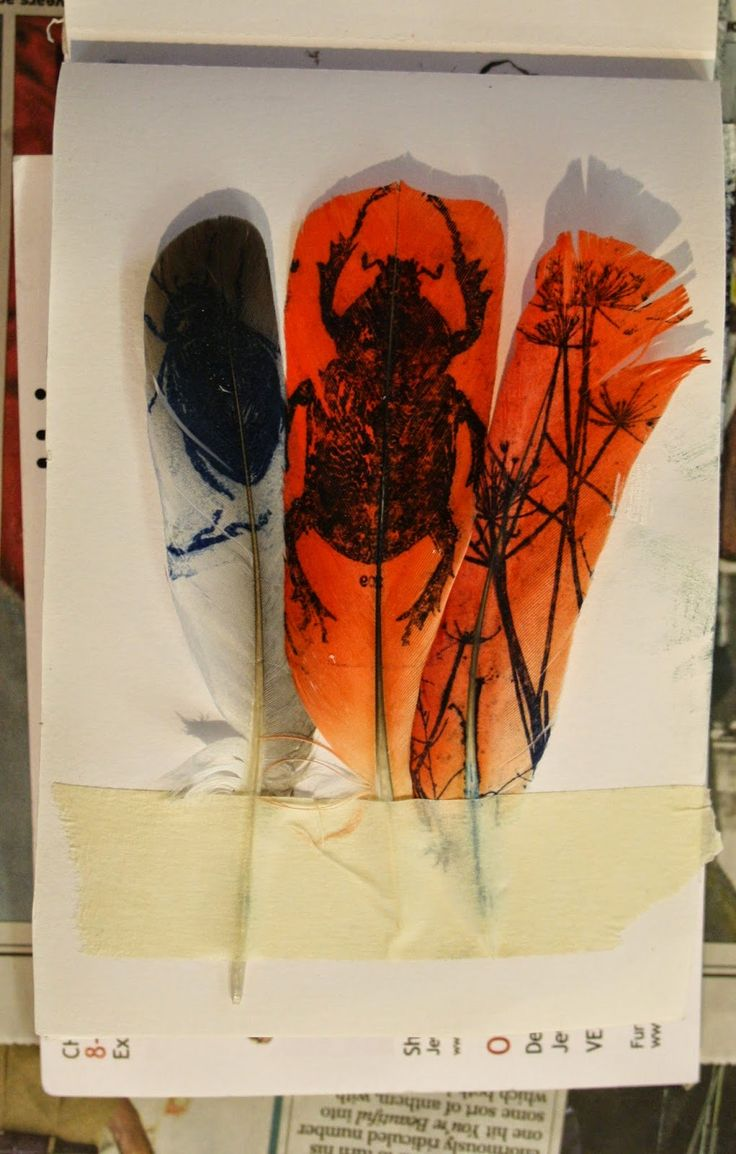 Gum transfer zerox onto feathers by Sue Brown, Cheltenham England printmaker