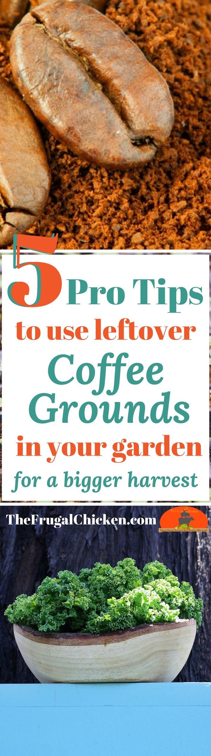 24677 Best Hometalk Gardening Images On Pinterest Gardening Vegetable Garden And Vegetables